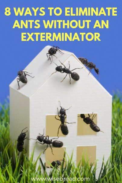 8 Ways to Eliminate Ants Without an Exterminator