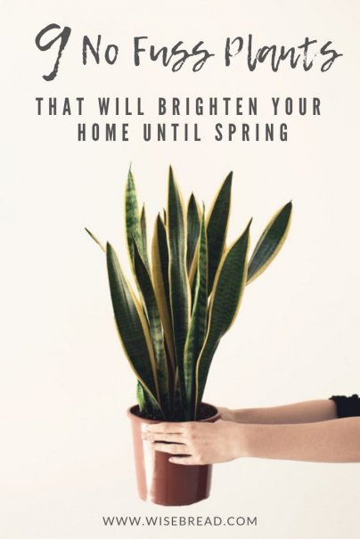 Looking for some easy to take care of indoor plants to grow in your house? These plants are easy to maintain, need low light, little water, and are simple to manage! They are even cheap, or in some cases free! From pathos, to mother in laws tongue, to the rubber plant, here are 9 plants to make your home green and air clean! We've even got some tips to take care of them! | #indoorplants #easyplants #householdplants