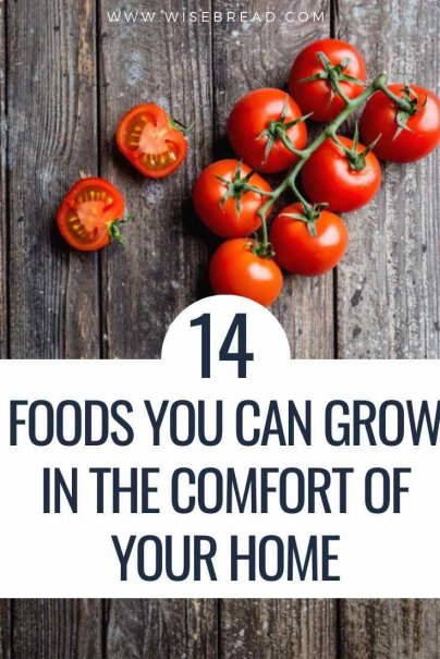 Don't have an outdoor green space where you can grow fresh food? Don't fret. There are plenty of foods that you can grow indoors. Here are 14 that will have you eating healthier and cheaper in no time. | #thriftyfood #indoorplants #organicfood