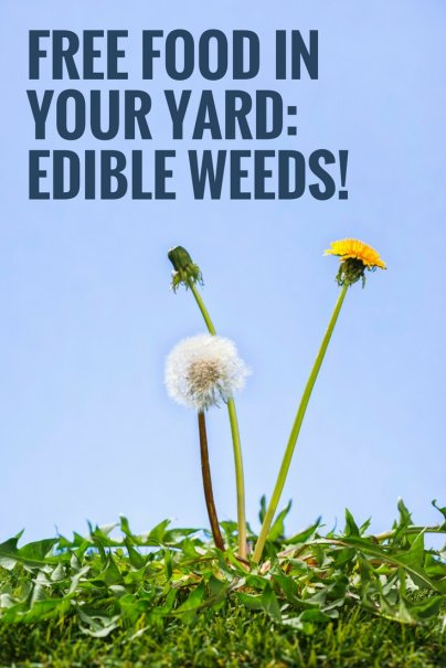 Free Food in Your Yard: Edible Weeds!