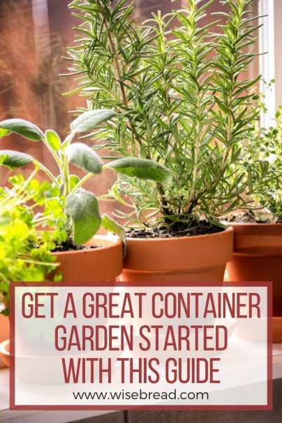 Get a Great Container Garden Started With This Guide
