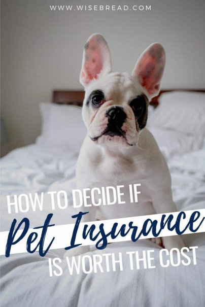 With pet insurance covering some costs of veterinary care, you're never forced to choose between your beloved pet and your finances. Here's what you need to know about pet insurance. | #pets #petcare #insurance