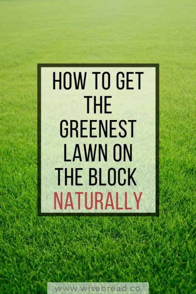 How to Get the Greenest Lawn on the Block — Naturally