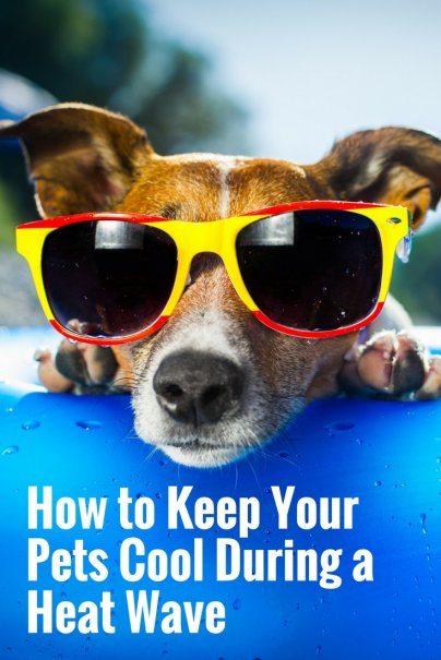 How to Keep Your Pets Cool During a Heat Wave