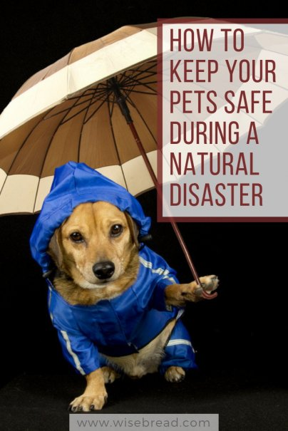 How to Keep Your Pets Safe During a Natural Disaster