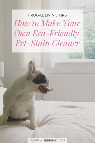 How to Make Your Own Eco-Friendly Pet-Stain Cleaner