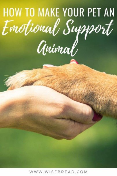 Ever considered making your pet an emotional support animal (or ESA)? Here's what you need to know about the process. | #ESA #emotionalsupportanimal #selfcare