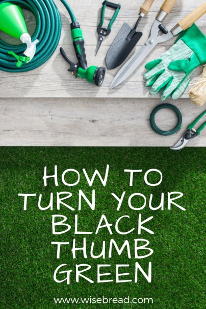 How to Turn Your Black Thumb Green