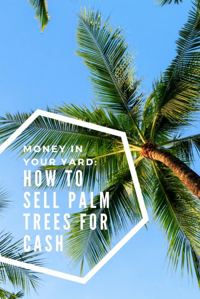 Money in Your Yard: How to Sell Palm Trees For Cash