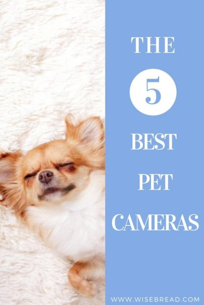 If you feel bad about leaving your pet alone, then a pet camera can ease the separation anxiety. You can speak to them, give them treats or even play with them. Check out our 5 best pet camera picks! | #petcamera #petzi #petcam