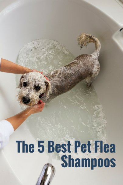 The 5 Best Pet Flea Shampoos