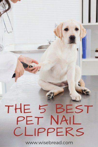 The 5 Best Pet Nail Clippers