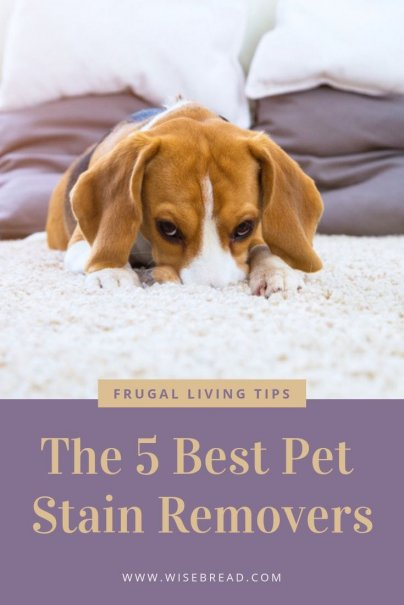 Pet accidents can leave troubling stains and odors behind. A mix of vinegar, water, and baking soda can do wonders for pet stains, but when you need some heavy duty carpet cleaners, you'll want quality pet stain removers on your side. We've are in the know of how to remove these stains, with the 5 best products. | #petstain #stainremover #carpetcleaner