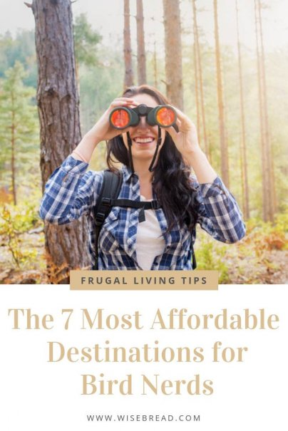 Planning your next bird watching trip, but is the cost of binoculars, equipment, and photography equipment stacking up? We've found the best affordable and budget bird-watching locations for you! Check out our tips and guides on which destinations to visit on your next bird watching trip! | #birdwatching #budgettravel #cheaptravel