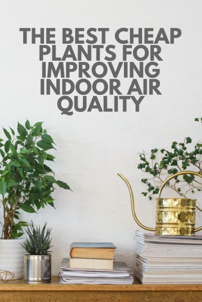 The Best Cheap Plants for Improving Indoor Air Quality