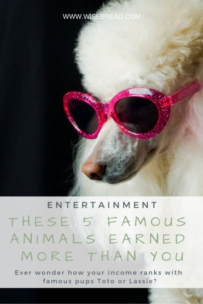These 5 Famous Animals Earned More Than You