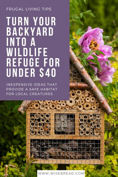 Turn Your Backyard Into a Wildlife Refuge for Under $40